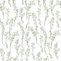 Seamless floral pattern, Capsella flower, Shepherd`s purse, Capsella bursa-pastoris, the entire plant, hand drawn vector