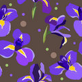 Seamless floral pattern with irises Royalty Free Stock Image