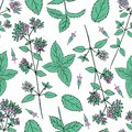 Seamless floral pattern, Mint branch, peppermint leaves, Blossoming oregano flowers vector doodle sketch hand drawn Royalty Free Stock Photo