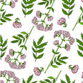 Seamless floral pattern, Valeriana officinalis hand drawn vector colorful illustration isolated on white background, for