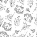 Seamless floral pattern, Valeriana officinalis hand drawn vector illustration isolated on white background, line art for