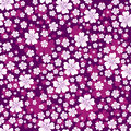 Seamless floral pattern with white colored flowers on bright violet background