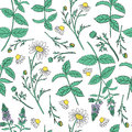 Seamless floral vector pattern, Mint leaves, peppermint buds, Chamomile wild field flower on white background