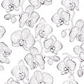 Seamless flower pattern with orchids phalaenopsis background Royalty Free Stock Photo