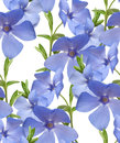 Seamless flral pattern border. Wild periwinkle flowers isolated Royalty Free Stock Photo
