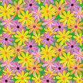 Seamless gerber daisies background Stock Photo