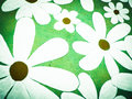 Seamless gerbera flowers pattern