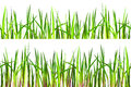 Seamless grass texture isolated white background top not high green grass below high grass reddish stems Stock Photos