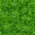 Seamless green foliage pattern. Green leaves background. Floral decor.