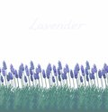 Seamless lavender pattern border with french Stock Photos