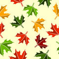 Seamless maple leaves pattern Royalty Free Stock Images