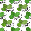 Seamless mint leaf pattern. Vector print for healthy product packaging design Royalty Free Stock Photo