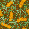 Seamless orange  sea-buckthorn with leafs, twig Stock Image