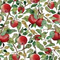 Seamless pattern apple tree branch with red apples watercolor stylized illustration