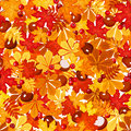 Seamless pattern with autumn leaves vector illustration chestnuts and rowanberries Royalty Free Stock Images