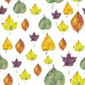 stock image of  Seamless pattern with autumn leaves on white background