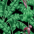 Seamless pattern with banana leaves. Royalty Free Stock Photo