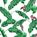 Seamless pattern with banana leaves. Decorative image of tropical foliage, flowers and fruits. Background made without Royalty Free Stock Photo