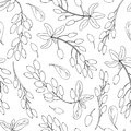 Seamless pattern Barberry hand drawn branch vector sketch isolated on white background, black line art berry, Natural