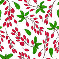 Seamless pattern, Barberry hand drawn branch vector sketch isolated on white background, colorful berry, Natural spicy