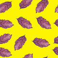 Seamless pattern with basil leaf