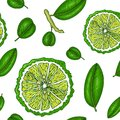 Seamless pattern with bergamot. Colorful wallpaper vector. Engraving sketch vintage style. Hand drawn illustration