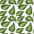 Seamless pattern of big leaves of hostas on a white background. Digital illustration.