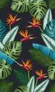 Seamless pattern with bird of paradise: tropical leaves, palms, monstera, calathea, jungle leaf seamless vector pattern. Swimwear