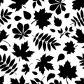 Seamless pattern with black silhouettes of autumn leaves on white vector a background Stock Image