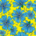 Seamless pattern blue cornflower flowers Stock Images
