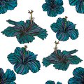 Seamless pattern with blue hibiscus flowers. Royalty Free Stock Photo