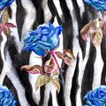 Seamless pattern of blue roses on a background of zebra skin Royalty Free Stock Photo