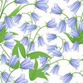 Seamless pattern of bluebells. Bluebell flowers with green leaves. Vector illustration on white background