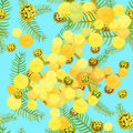 Seamless pattern Branch of mimosa acacia silvery whitened Vecto