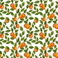 seamless pattern with branches of apricot tree with fruits and leaves Royalty Free Stock Photo