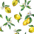 The seamless pattern of the branches of fresh citrus fruit lemons with green leaves and flowers.