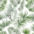 seamless pattern of bright green tropical leaves on white background.Vector Tropical palm leaves seamless pattern. Jungle floral