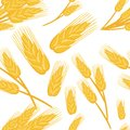 Seamless pattern of bunches of wheat ingredient for bread baking organic vegetarian food vector illustration on white background w Royalty Free Stock Photo