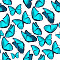 Seamless pattern the butterfly blue morpho monarch vector illust Royalty Free Stock Photo