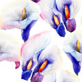 Seamless pattern with calla lily flowers watercolor illustration Stock Photo