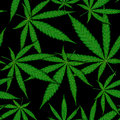 Seamless pattern of cannabis leaf on black background