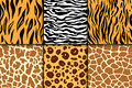 Seamless pattern with cheetah skin. vector background. Colorful zebra and tiger, leopard and giraffe exotic animal print Royalty Free Stock Photo