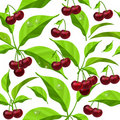Seamless pattern with cherry  leaves and berries Stock Image