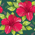 Seamless pattern with Chinese Hibiscus flower in red and green ornate leaves on the dark green background Royalty Free Stock Photo