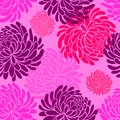 Vector japanese seamless pattern with Chrysanthemums on pink background ,japanese floral pattern tenugui