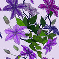 Seamless pattern with clematis flowers vector illustration of Royalty Free Stock Photo