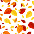 Seamless pattern with colorful autumn leaves of various colors on a white background Royalty Free Stock Photos