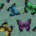 Seamless pattern with colorful butterflies Royalty Free Stock Photography