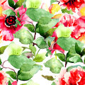 Seamless pattern with colorful red flowers watercolor illustration Royalty Free Stock Photo