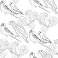 Seamless pattern coloring Jaco, Lovebird, wavy parrot kakadu. Ve